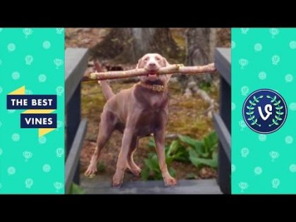 Best Animal Fails Compilation Part 1 | Top Funny Pets Fail August 2016