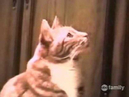 Crazy Cats 2-America's Funniest Home Videos-Bob Saget