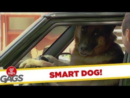 Smart Dog Drives Smart Car