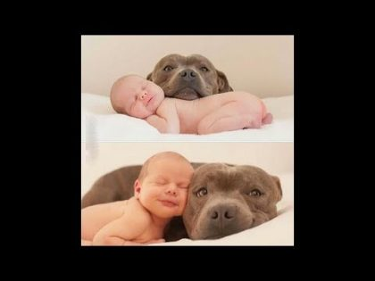 A cute baby and a dog – A baby and a dog play extremely funny