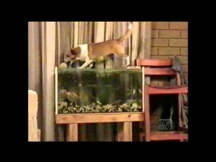 Dog park collection (Americas Funniest Home Videos / AFV)