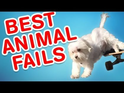 Best Animal Fails | Funny Fail Compilation