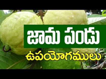 Benefits of Guava II  Best Health and Beauty Tips II Telugu