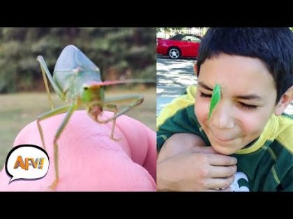 Funny Bug Pranks from October 2018   Try Not to Squirm Challenge