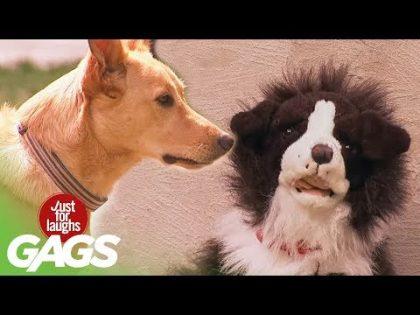 Stuffed Dog Attacks Real Dog Prank