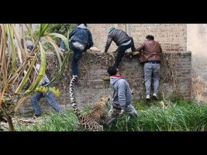 Lion Village Ma Ay Gay . Phar Kay Howa  . New Video 2019 . Pakistan News