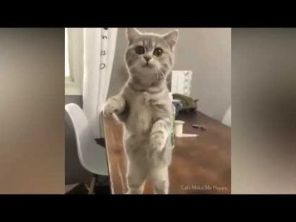 Lovely 😻Cats are so Funny 🐶Try To Not Laugh Videos