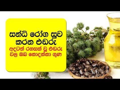 අදටත් රහසක් වූ එඬරු වල ඔබ නොදන්නා ගුණ  – Health And Beauty Benefits Of Castor Oil