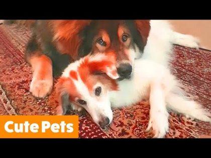 Cutest Funny Animals | Funny Pet Videos