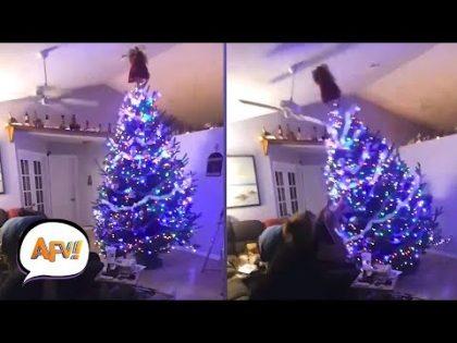 Funny and Cute Christmas Tree Fails | AFV Funniest Fail Videos