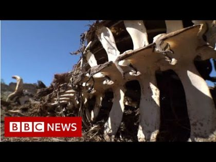 South African drought town's warning to the world – BBC News