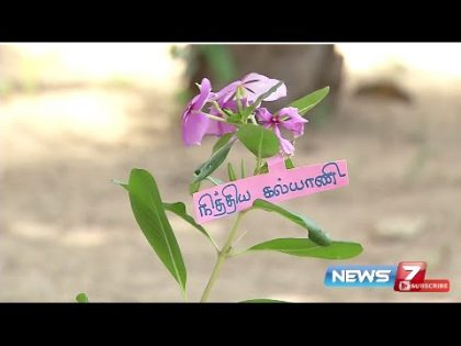 Health and beauty benefits of Nithya Kalyani | Poovali | News7 Tamil