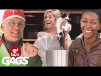 Best of Animal Pranks Vol. 2 | Just For Laughs Compilation