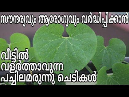 Ayurvedic herbs for health and beauty jaiva krishi tips in malayalam | aarogyam ottamooli tips