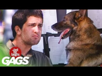 Driving Dog Prank – Just For Laughs Gags