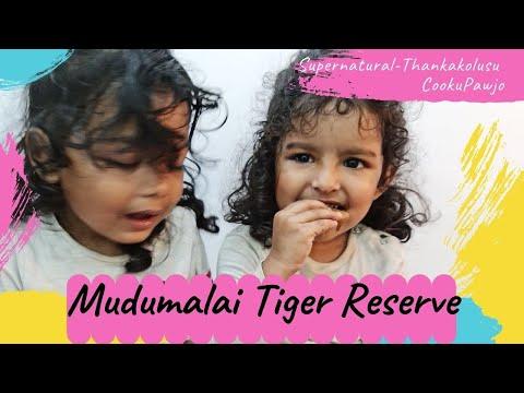 66. Travel Vlog to Mudumalai  – Tiger Reserve👌
