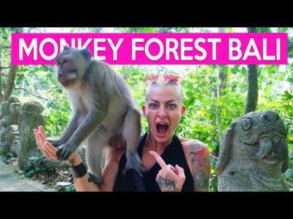 MONKEY FOREST – Fun in Ubud, Bali (Family Travel Vlog) 2021