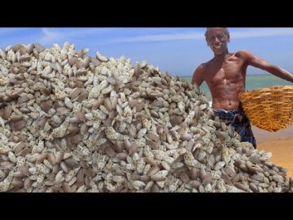 MOLE CRABS HUNTING   SEA FOOD RECIPE   Prepare by KARUPPASAI GRAND FATHER -KGF COOKING CHANNEL