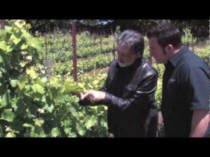 Bushfield Estate Vineyard – Health Beauty Life The Show