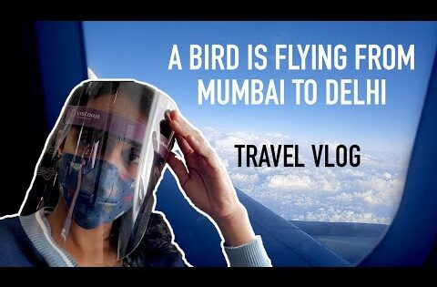 A bird is flying |  mumbai to Delhi | karishma patel | travel vlog