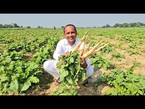 Mooli Palak Ki Sabzi Recipe | Mubashir Saddique | Village Food Secrets